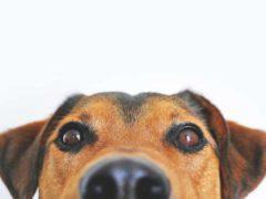 Jak mądrze karmić psa