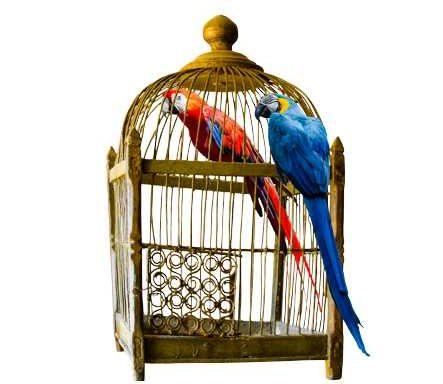 Ptak jako domowy pupil – jaki gatunek wybrać